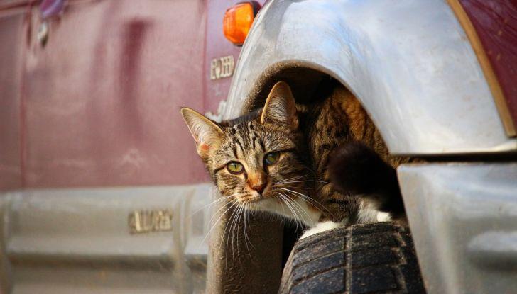 Trasporti pubblici gratuiti per cani, gatti e animali d'affezione - Foto 8 di 8
