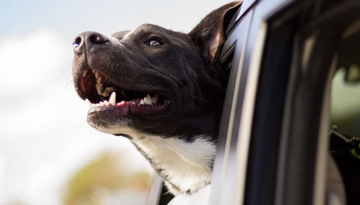 Trasporti pubblici gratuiti per cani, gatti e animali d'affezione - Foto 2 di 8
