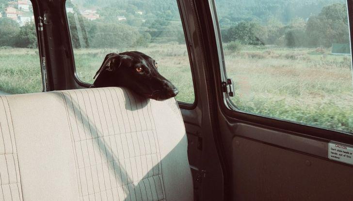 Trasporti pubblici gratuiti per cani, gatti e animali d'affezione - Foto 3 di 8