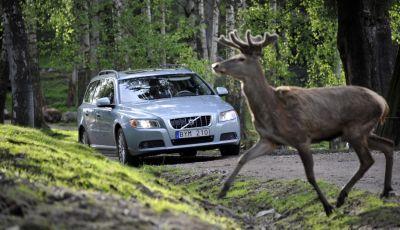 Cosa fare se si investe un animale con l'auto