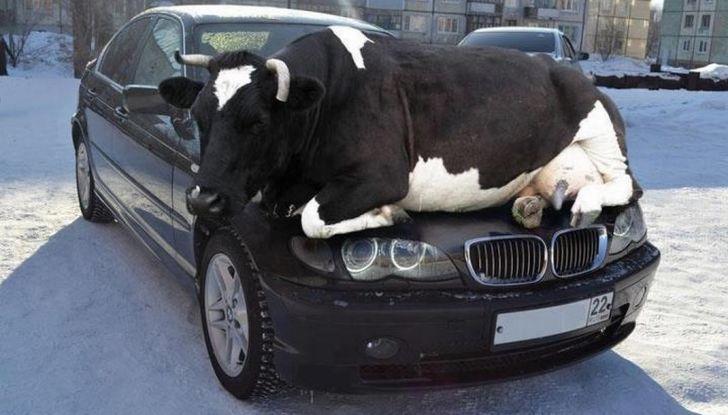 Cosa fare se si investe un animale con l'auto - Foto 10 di 11