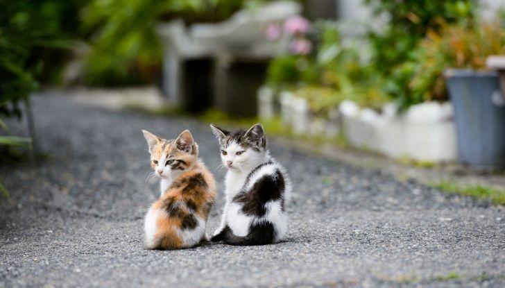 """Nuova truffa auto: """"ha investito un gatto"""", ma la derubano - Foto 4 di 11"""