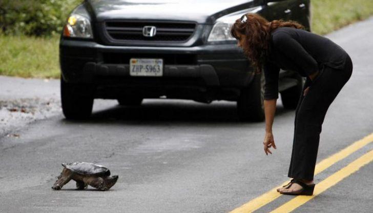 """Nuova truffa auto: """"ha investito un gatto"""", ma la derubano - Foto 6 di 11"""