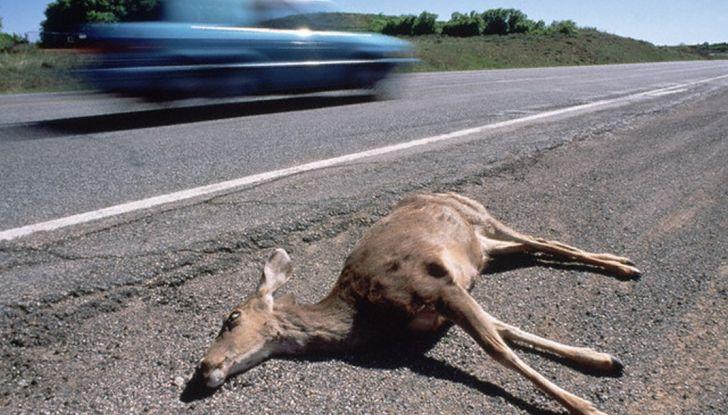 Cosa fare se si investe un animale con l'auto - Foto 7 di 11