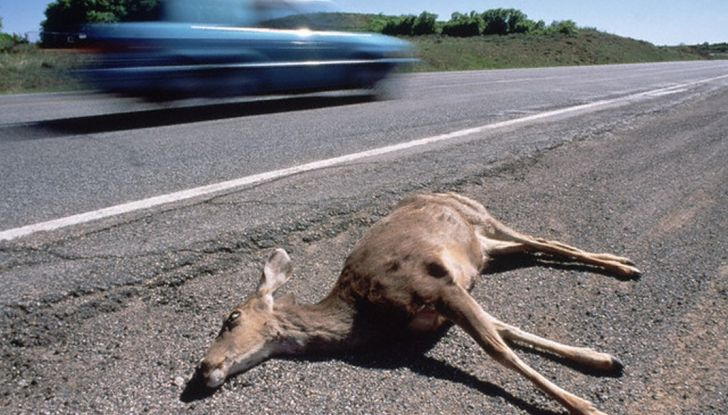 """Nuova truffa auto: """"ha investito un gatto"""", ma la derubano - Foto 7 di 11"""
