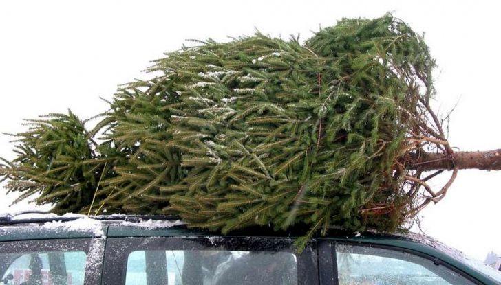 Come trasportare l'albero di Natale in auto senza incorrere in sanzioni - Foto 4 di 9