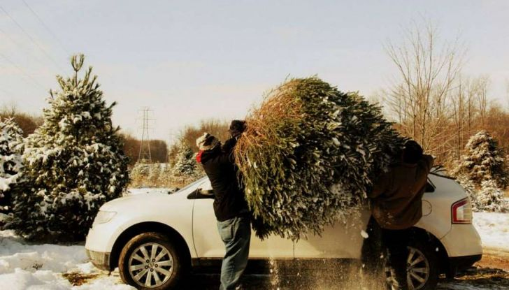 Come trasportare l'albero di Natale in auto senza incorrere in sanzioni - Foto 7 di 9