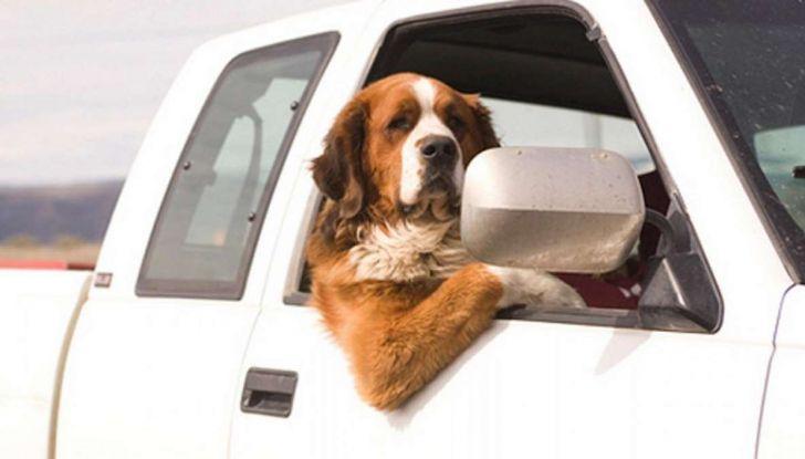 Assicurazioni animali in auto - Foto 4 di 7