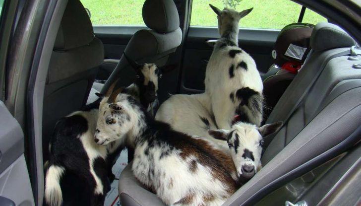Assicurazioni animali in auto - Foto 2 di 7