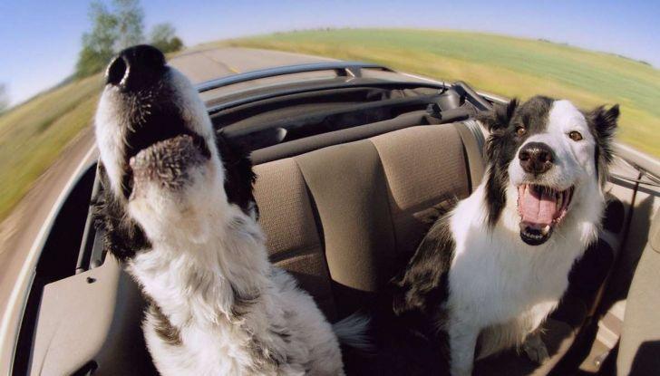 Assicurazioni animali in auto - Foto 3 di 7