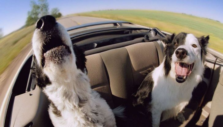 Viaggiare con gli animali: le regole in aereo, traghetto e treno - Foto 3 di 7