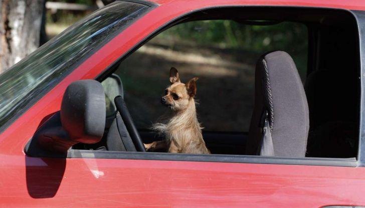 Assicurazioni animali in auto - Foto 5 di 7