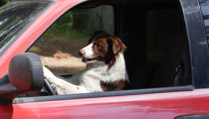 Viaggiare con gli animali: le regole in aereo, traghetto e treno - Foto 7 di 7