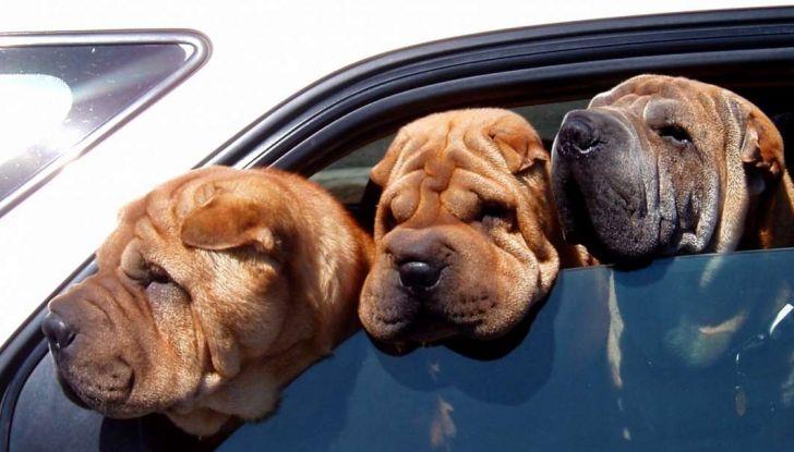 Assicurazioni animali in auto - Foto 1 di 7