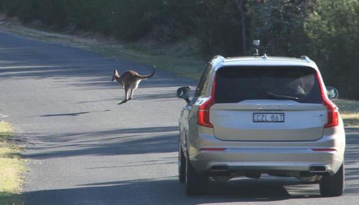 Australia, i canguri fanno saltare la guida autonoma Volvo - Foto 3 di 7