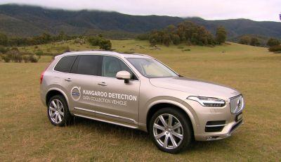 Australia, i canguri fanno saltare la guida autonoma Volvo