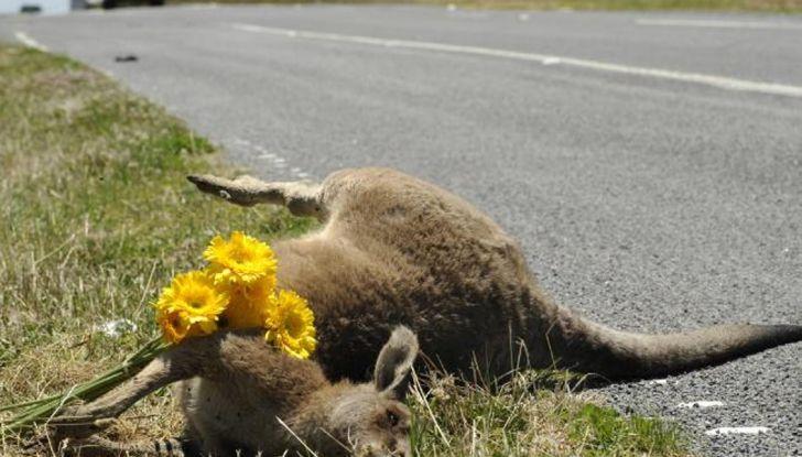 Australia, i canguri fanno saltare la guida autonoma Volvo - Foto 7 di 7