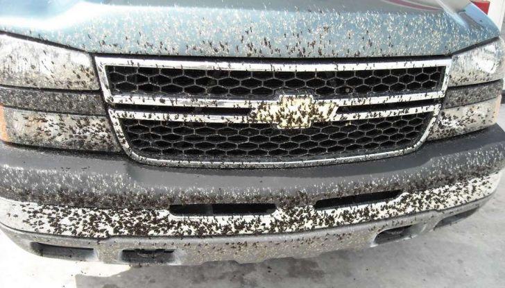 Come rimuovere i moscerini dalla carrozzeria dell'auto - Foto 8 di 8