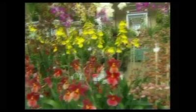 Video Citroen a Orticolario 2009