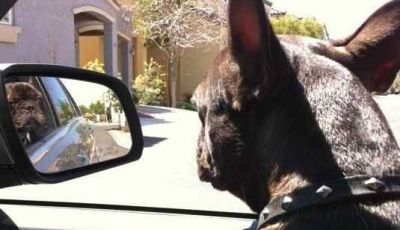 Animali in auto: come trasportare cani e gatti secondo il Codice della Strada