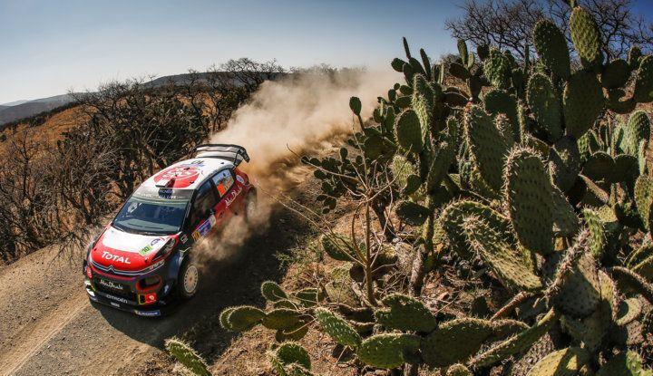 WRC Messico 2018- shakedown: il ritmo giusto per le C3 WRC - Foto 1 di 4