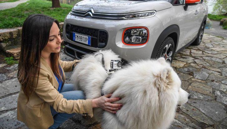 """Citroën lancia il kit """"Pet à Porter"""" per la sicurezza dei cani in auto - Foto 11 di 25"""