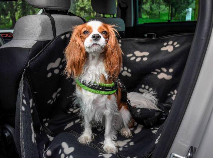 """Citroën lancia il kit """"Pet à Porter"""" per la sicurezza dei cani in auto - Foto 14 di 25"""