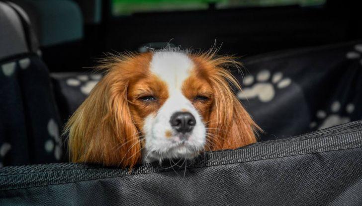 """Citroën lancia il kit """"Pet à Porter"""" per la sicurezza dei cani in auto - Foto 15 di 25"""
