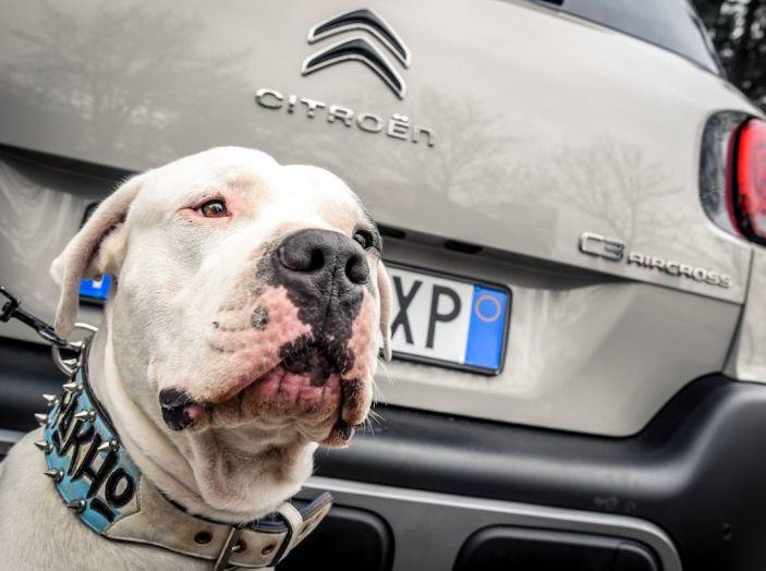 """Citroën lancia il kit """"Pet à Porter"""" per la sicurezza dei cani in auto - Foto 22 di 25"""