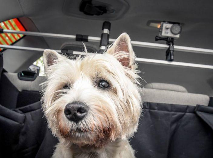 """Citroën lancia il kit """"Pet à Porter"""" per la sicurezza dei cani in auto - Foto 24 di 25"""