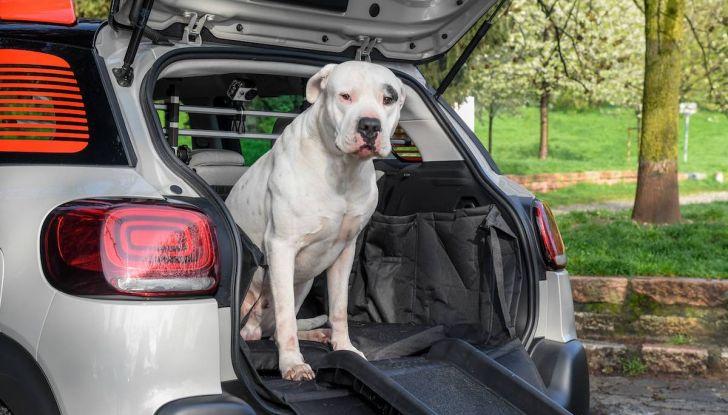 """Citroën lancia il kit """"Pet à Porter"""" per la sicurezza dei cani in auto - Foto 3 di 25"""
