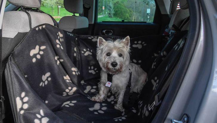 """Citroën lancia il kit """"Pet à Porter"""" per la sicurezza dei cani in auto - Foto 4 di 25"""