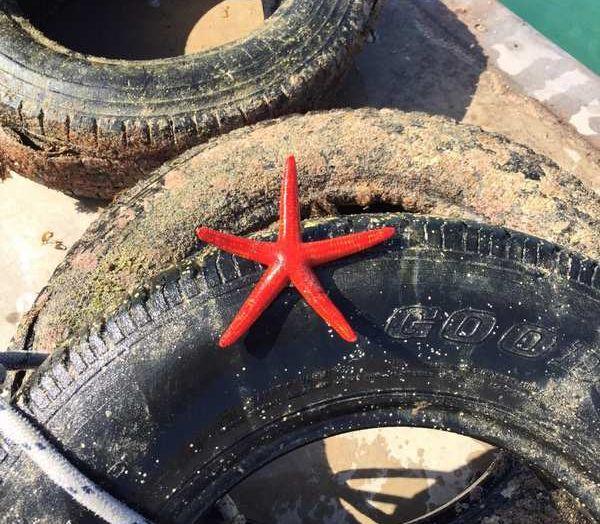 8.500 pneumatici recuperati dai fondali marini italiani - Foto 2 di 6