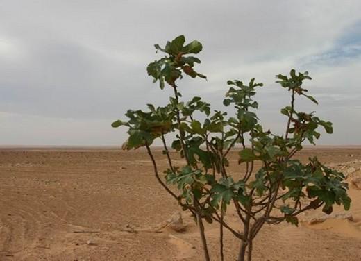 Stelvio Ride in Tunisia - Foto 4 di 10