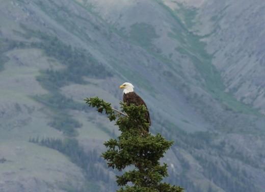 Transamerica 2008 - Foto 2 di 17