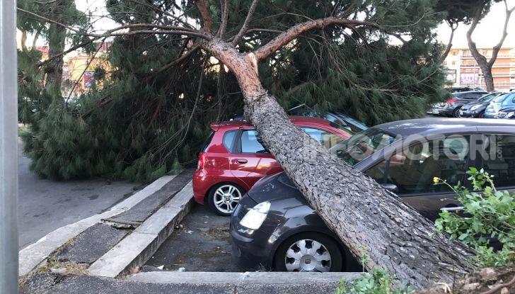 La caduta di un albero dopo un temporale