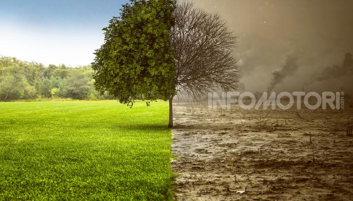 Inquinamento terra albero