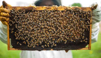 Rolls-Royce si dedica alla produzione di miele… di lusso