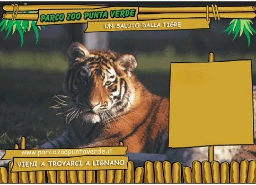 focus: Parco Zoo Punta Verde - Foto 2 di 5