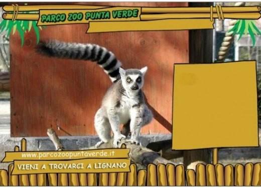 focus: Parco Zoo Punta Verde - Foto 3 di 5