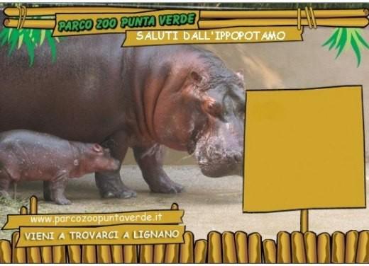 focus: Parco Zoo Punta Verde - Foto 4 di 5