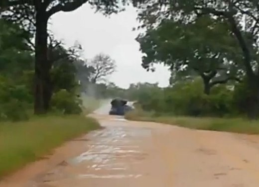 Elefante attacca un'auto in Sudafrica video - Foto 14 di 14