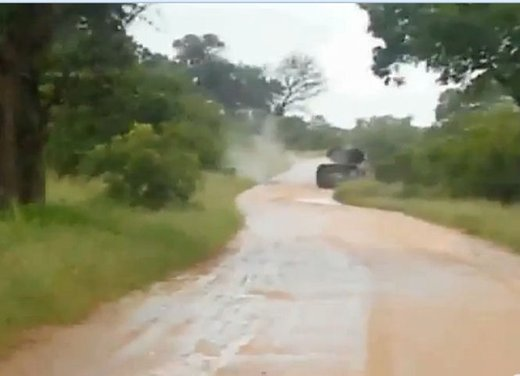 Elefante attacca un'auto in Sudafrica video - Foto 13 di 14