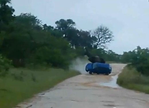 Elefante attacca un'auto in Sudafrica video - Foto 7 di 14