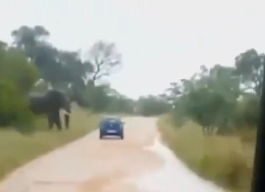 Elefante attacca un'auto in Sudafrica video - Foto 5 di 14