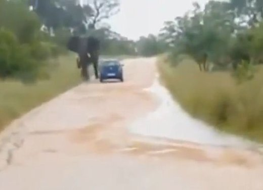Elefante attacca un'auto in Sudafrica video - Foto 3 di 14