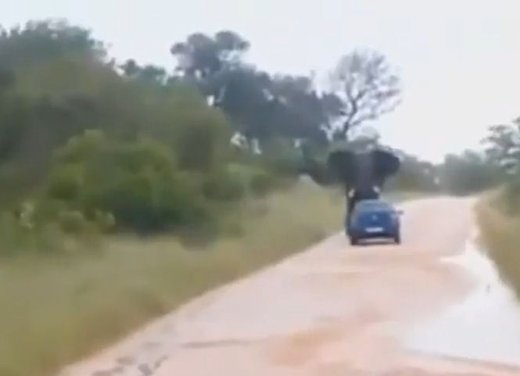 Elefante attacca un'auto in Sudafrica video - Foto 4 di 14