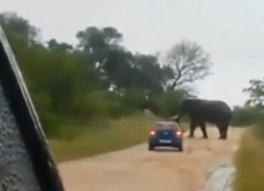 Elefante attacca un'auto in Sudafrica video - Foto 2 di 14