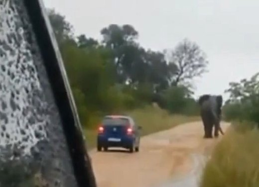 Elefante attacca un'auto in Sudafrica video - Foto 1 di 14